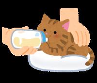 子猫の授乳
